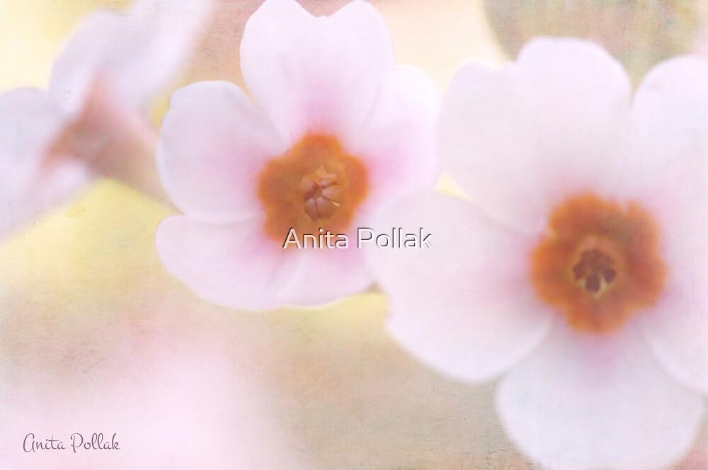 Dreamy Primroses by Anita Pollak