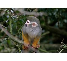 Squirrel Monkey Photographic Print