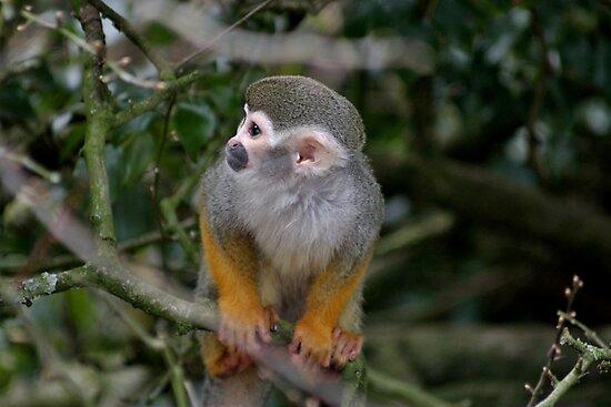 Squirrel Monkey by Ladymoose