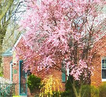 Cherry Tree by Brick House by Susan Savad