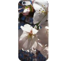 Cherry Blossom Glow iPhone Case/Skin