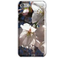 Cherry Blossom Glow iPhone Case/Skin
