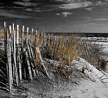 Golden Sea Grass by Jim Semonik