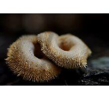 Furry doughnuts Photographic Print