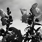 Flower Power by Adam Kuehl