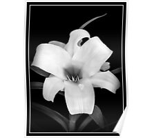 Easter Lilly Front Poster