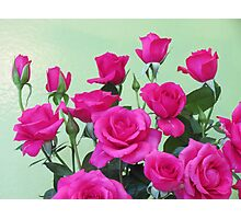 Champion Roses  Photographic Print