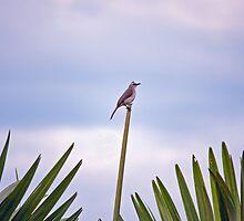 Bird in Space by jayneeldred