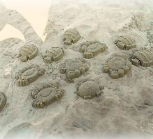©NS-MS Art In The Sand by OmarHernandez