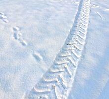 Tracks by globeboater