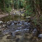 Rainforest Creek into the Mulgrave River by Chris Cohen