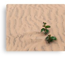 Rippled Sands Canvas Print