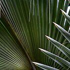Palm Spikes by Adam Bykowski