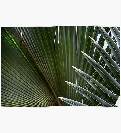 Palm Spikes Poster