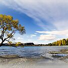 Tree - Lake Wanaka  New Zealand  -  2013 by bekyimage
