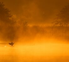 Cormorant Landing on Golden Pond by Paul Wolf