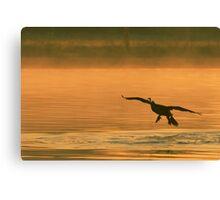 Cormorant Landing at Sunrise Canvas Print