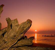 Driftwood and Rising Sun by Paul Wolf