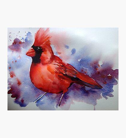 The Cardinal returns Photographic Print