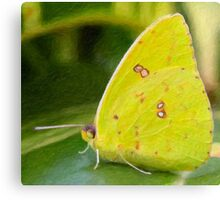 Cloudless Giant Sulphur Butterfly-Impasto Style Digital Painting Canvas Print