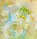impressions of spring by Teresa Pople