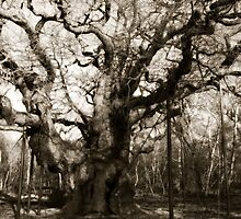 Major Oak b/w by SuzyPhoto
