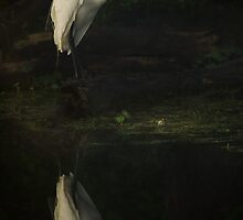 Egret at Dawn by Paul Wolf