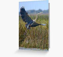 Great Blue Heron Taking Off Greeting Card