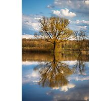 Nature photo of a tree and deep blue sky water reflection Photographic Print