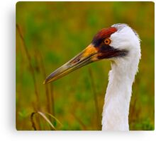 Whooping Crane Portrait 2 Canvas Print