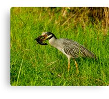 Night-heron and Crawfish Canvas Print