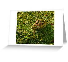 Baby Gator Greeting Card
