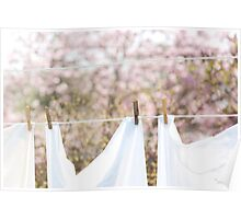 ...fresh laundry and magnolias.......... Poster