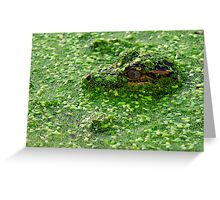 Baby American Alligator Greeting Card