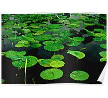Lily Pads on Dark Water-Digital Painting Poster