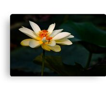 Lotus Flower and a Visitor Canvas Print