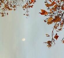 Autumn Moon by Guy Ricketts
