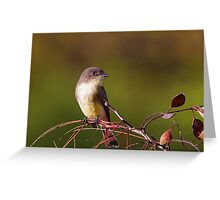 Eastern Phoebe Close Up Greeting Card