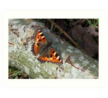 The Small Tortoiseshell Art Print