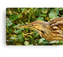American Bittern With Small Fish Canvas Print