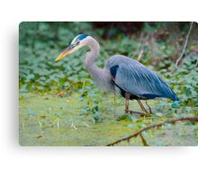 Great Blue Heron Digital Painting Canvas Print