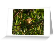 Common Yellowthroat Greeting Card