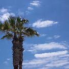 Palms by Georden