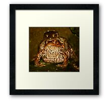 Toady went a-courting Framed Print