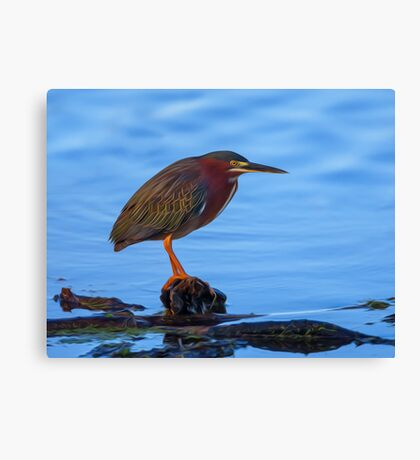 Green Heron in Breeding Plumage - Digital Oil Canvas Print