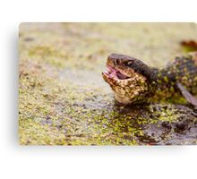 Just Swallowed the Bullfrog Canvas Print