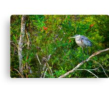 Great Blue Heron Environment Canvas Print