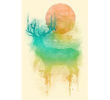 Color Drop - Deer Photographic Print