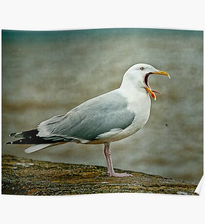 Noisy Herring Gull Poster