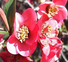 The Bright Pink Flower's Burst by Kieran Rundle